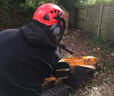 stump-grinding-an-ash-stump-surrey